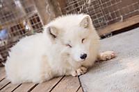 20140614_140050_foxinfonet